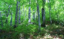 Páchateľ sa ulakomil na stromy, zmizlo až 29 kusov