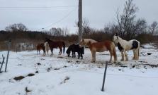 Smutné: Zlodej v okrese Bardejov ukradol kone