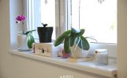lavender ahojbardejov (8).JPG