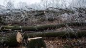 Muž bez povolenia vyrúbal 775 drevín, hrozia mu dva roky