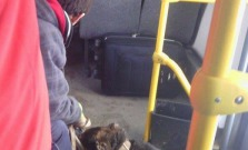 Pes v autobuse