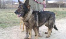 Hľadá sa majiteľ psíka, našiel sa na Vinbargu