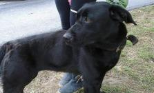 Ďalší nájdený psík na sídlisku Vinbarg