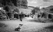 Vernisáž autorskej výstavy fotografa fotoklubu BARDAF